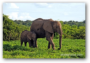 Mother and baby elephant, Botwana, Africa
