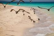 Lido Beach, Somalia Birds